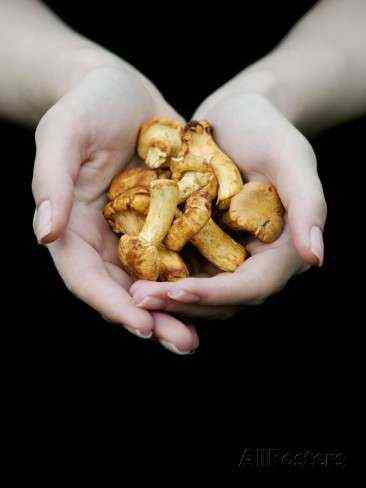 A handful of magic mushrooms