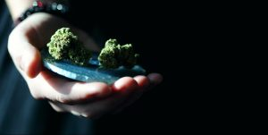 Could Microdosing Cannabis Keep Your Mind Young?