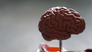Can Ayahuasca Help Grow New Brain Cells?