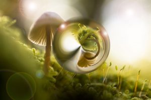 Psilocybin Truffles vs. Psilocybin Mushrooms