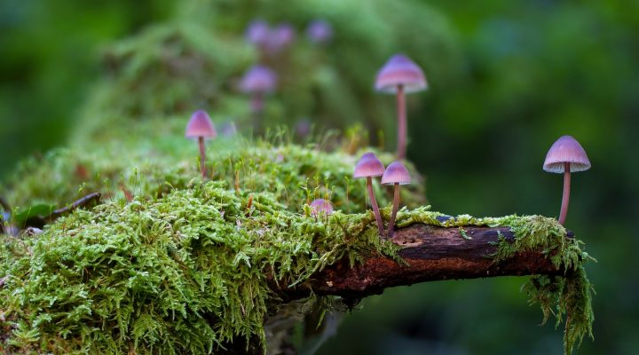 Photo of mushrooms growing in moss