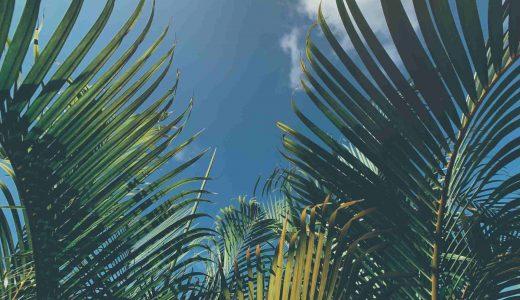 Entheogens-palm-trees