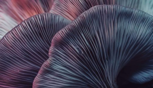Close,Up,Beautiful,Bunch,Mushrooms,Color,Light,In,The,Tree