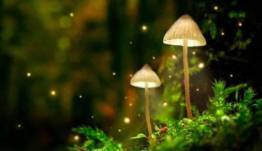 Glowing,Mushroom,Lamps,With,Fireflies,In,Magical,Forest